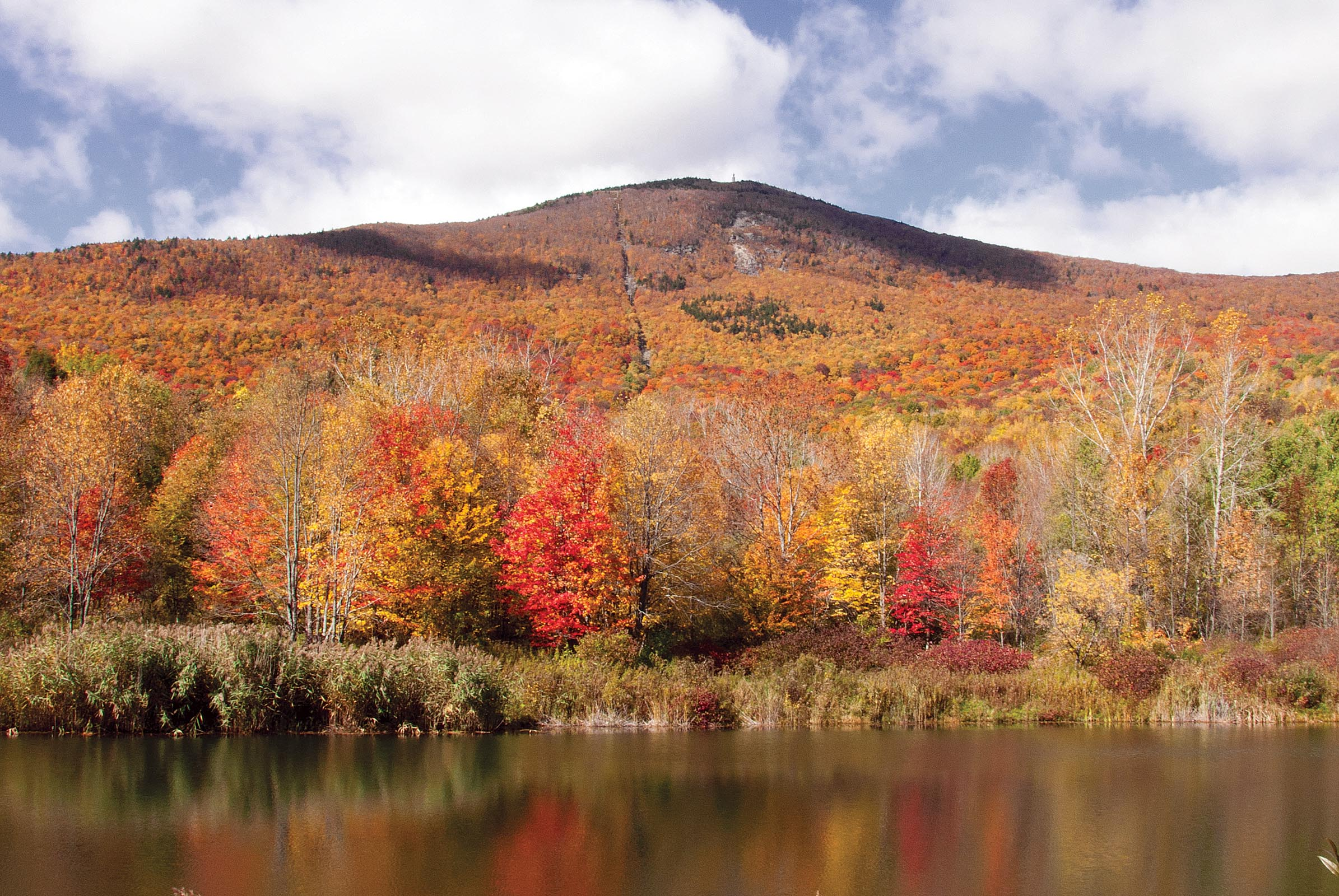 Greylock Glen Autumn